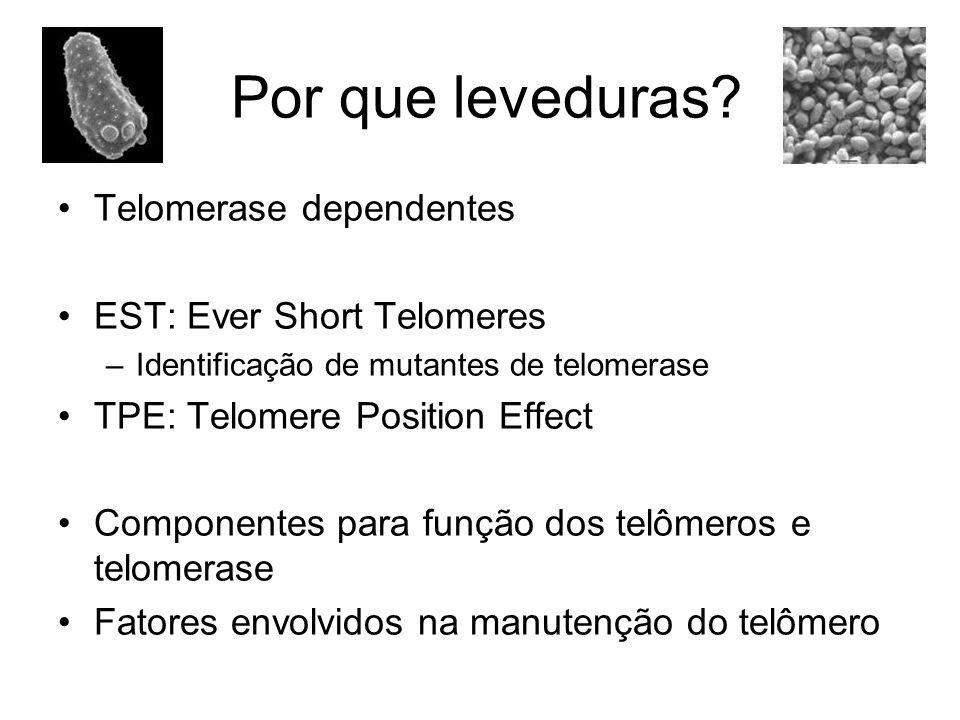 Telomerase dependentes EST: Ever Short Telomeres –Identificação de mutantes de telomerase TPE: Telomere Position Effect Componentes para função dos te