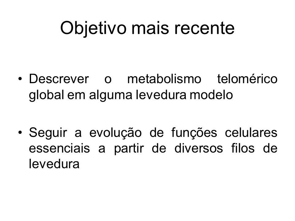 Objetivo mais recente Descrever o metabolismo telomérico global em alguma levedura modelo Seguir a evolução de funções celulares essenciais a partir d