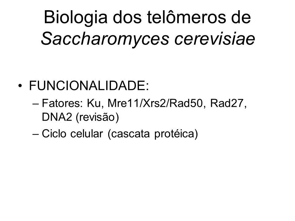 Biologia dos telômeros de Saccharomyces cerevisiae FUNCIONALIDADE: –Fatores: Ku, Mre11/Xrs2/Rad50, Rad27, DNA2 (revisão) –Ciclo celular (cascata proté