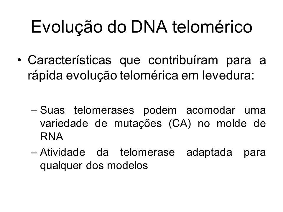 Evolução do DNA telomérico Características que contribuíram para a rápida evolução telomérica em levedura: –Suas telomerases podem acomodar uma varied