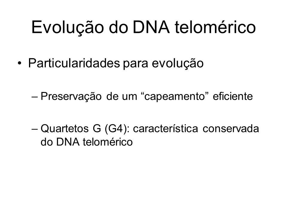Evolução do DNA telomérico Particularidades para evolução –Preservação de um capeamento eficiente –Quartetos G (G4): característica conservada do DNA