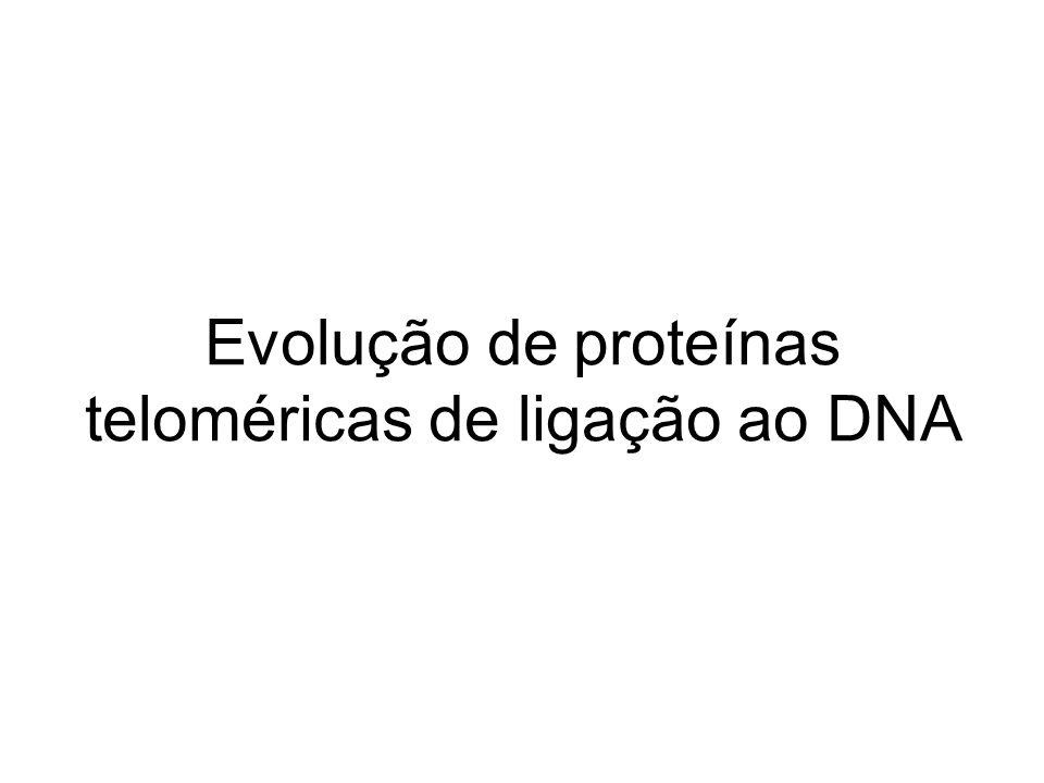 Evolução de proteínas teloméricas de ligação ao DNA