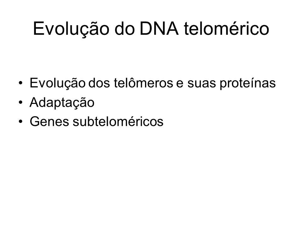 Evolução do DNA telomérico Evolução dos telômeros e suas proteínas Adaptação Genes subteloméricos