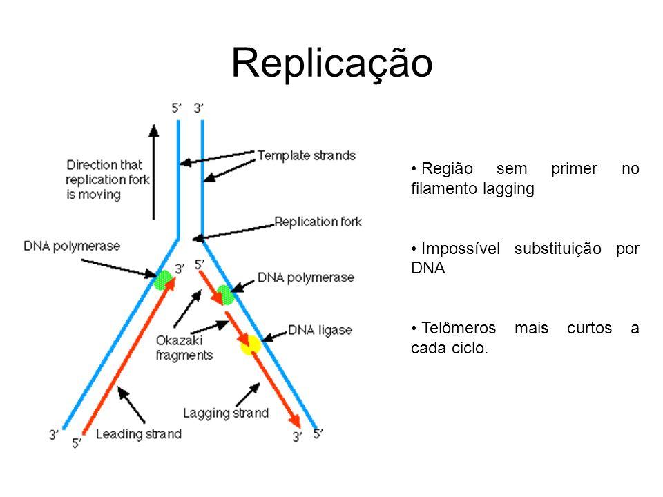 Replicação Região sem primer no filamento lagging Impossível substituição por DNA Telômeros mais curtos a cada ciclo.