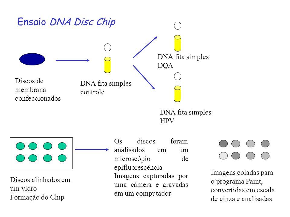 Ensaio DNA Disc Chip Discos de membrana confeccionados DNA fita simples controle DNA fita simples HPV DNA fita simples DQA Discos alinhados em um vidr