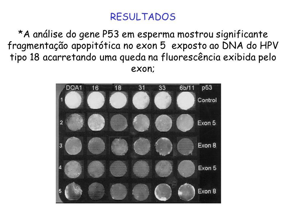 *Em contraste, a exposição do DNA ao HPV tipo 16 resulta em fragmentação do DNA do exon 8 mas não do exón 5; *O HPV dos tipos 31 e 33 não exibem fragmentação significante; *O DNA intacto DQA1 exibe máxima fluorescência em contraste com o DNA danificado que devido a pouca hibridação exibe pouca fluorescência;