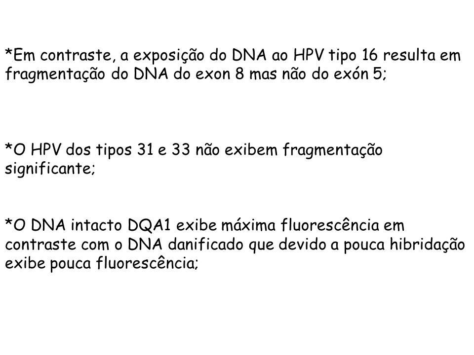 *Em contraste, a exposição do DNA ao HPV tipo 16 resulta em fragmentação do DNA do exon 8 mas não do exón 5; *O HPV dos tipos 31 e 33 não exibem fragm