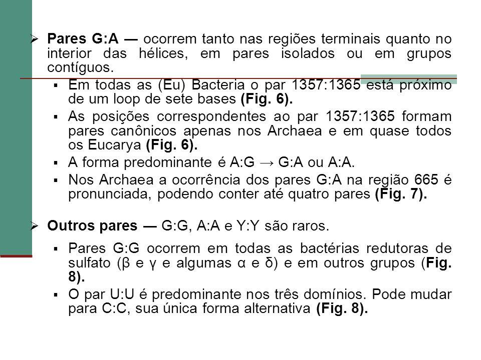 Pares G:A ocorrem tanto nas regiões terminais quanto no interior das hélices, em pares isolados ou em grupos contíguos. Em todas as (Eu) Bacteria o pa