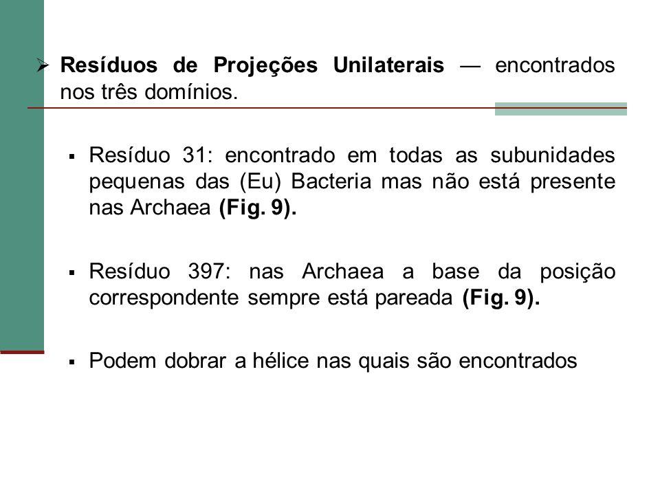 Resíduos de Projeções Unilaterais encontrados nos três domínios. Resíduo 31: encontrado em todas as subunidades pequenas das (Eu) Bacteria mas não est