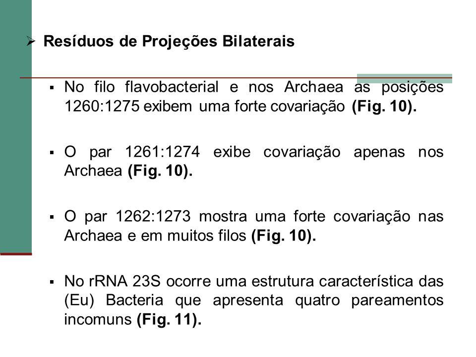 Resíduos de Projeções Bilaterais No filo flavobacterial e nos Archaea as posições 1260:1275 exibem uma forte covariação (Fig. 10). O par 1261:1274 exi