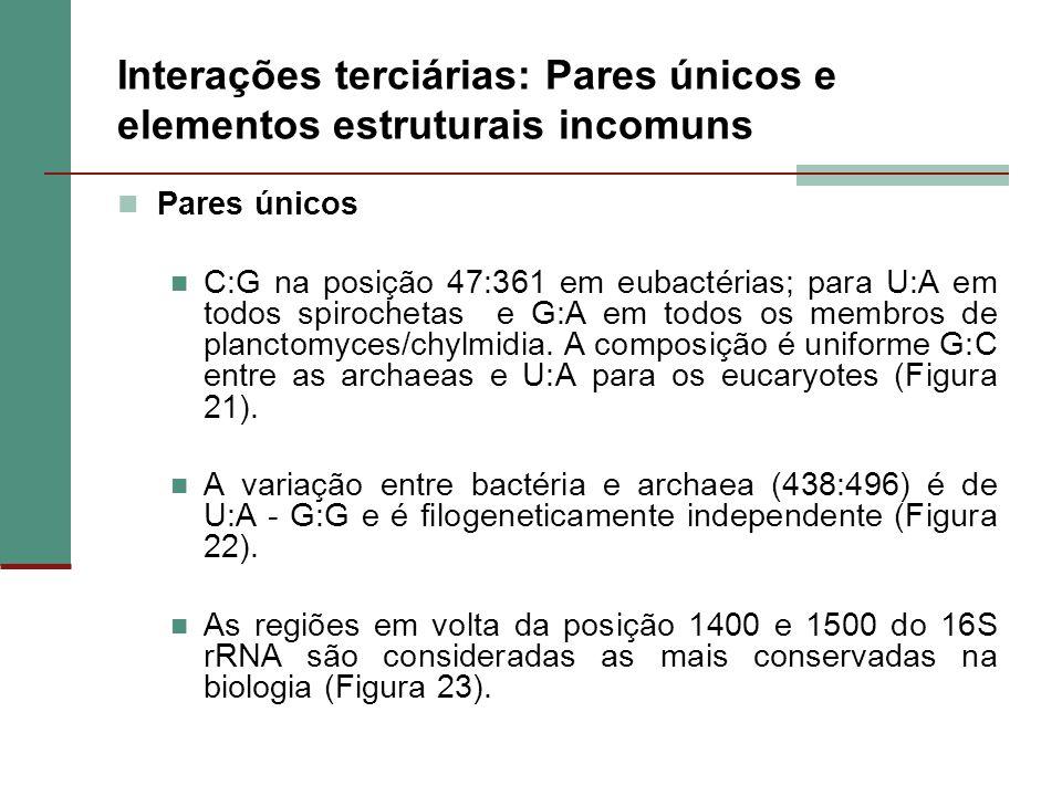 Interações terciárias: Pares únicos e elementos estruturais incomuns Pares únicos C:G na posição 47:361 em eubactérias; para U:A em todos spirochetas