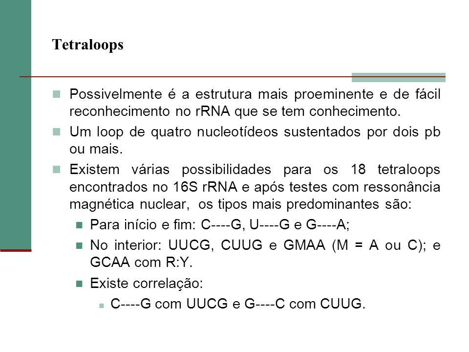 Tetraloops Possivelmente é a estrutura mais proeminente e de fácil reconhecimento no rRNA que se tem conhecimento. Um loop de quatro nucleotídeos sust