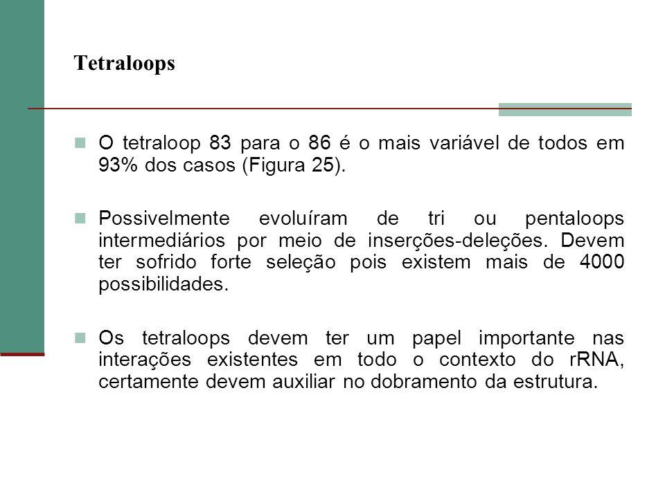 Tetraloops O tetraloop 83 para o 86 é o mais variável de todos em 93% dos casos (Figura 25). Possivelmente evoluíram de tri ou pentaloops intermediári