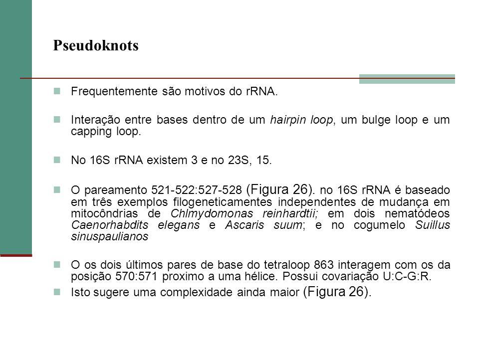 Pseudoknots Frequentemente são motivos do rRNA. Interação entre bases dentro de um hairpin loop, um bulge loop e um capping loop. No 16S rRNA existem