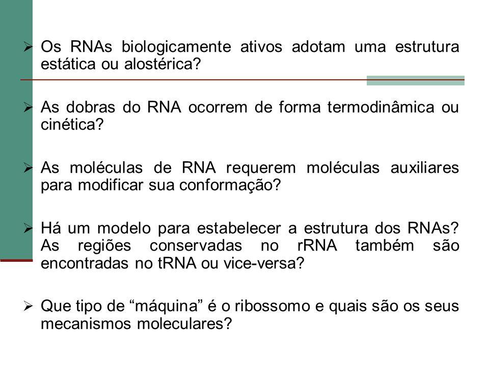 Os RNAs biologicamente ativos adotam uma estrutura estática ou alostérica? As dobras do RNA ocorrem de forma termodinâmica ou cinética? As moléculas d