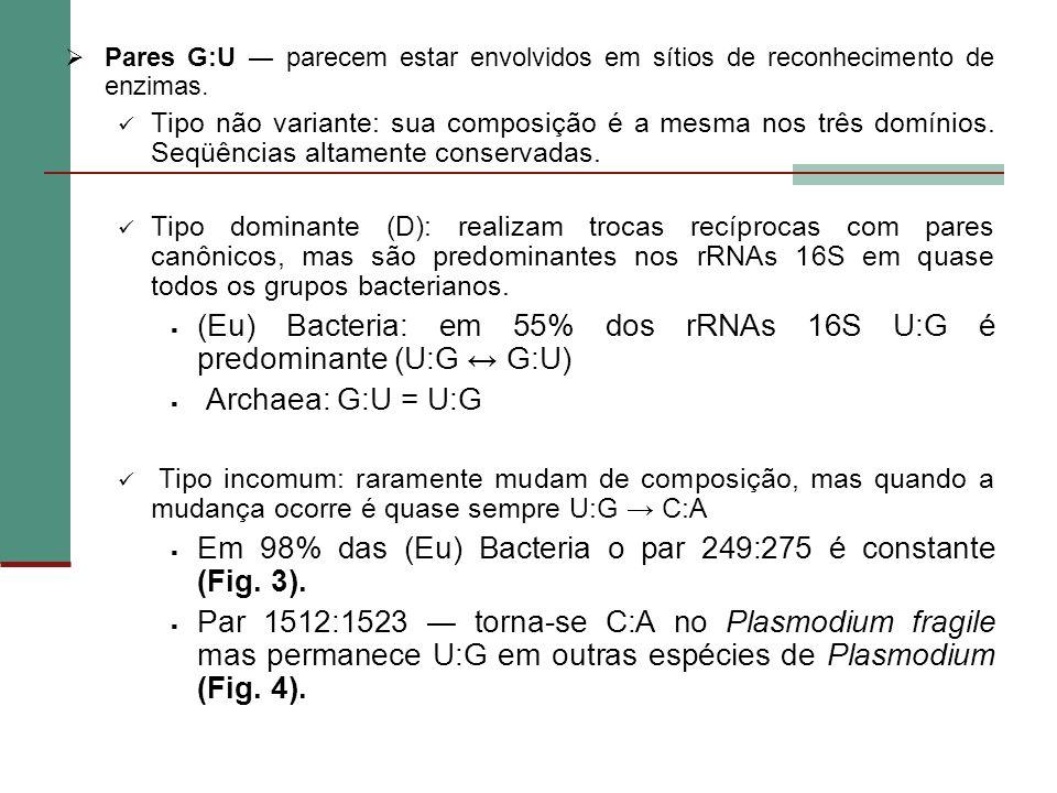 Pares G:U parecem estar envolvidos em sítios de reconhecimento de enzimas. Tipo não variante: sua composição é a mesma nos três domínios. Seqüências a