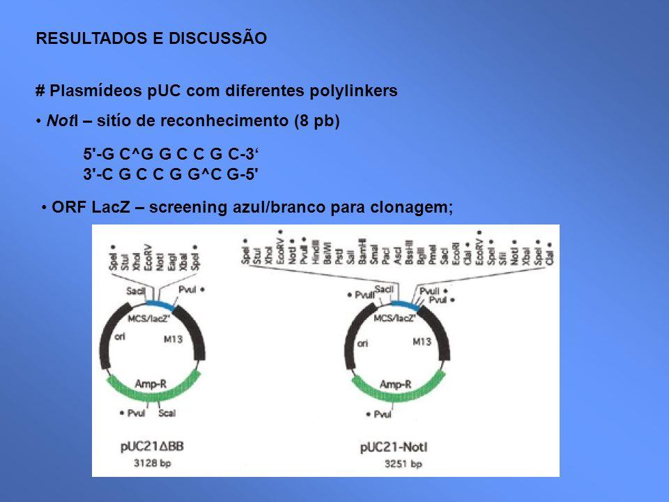 RESULTADOS E DISCUSSÃO # Plasmídeos pUC com diferentes polylinkers NotI – sitío de reconhecimento (8 pb) 5'-G C^G G C C G C-3 3'-C G C C G G^C G-5' OR