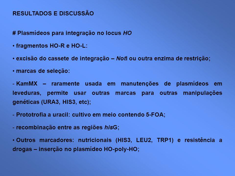 RESULTADOS E DISCUSSÃO # Plasmídeos para integração no locus HO fragmentos HO-R e HO-L: excisão do cassete de integração – NotI ou outra enzima de res