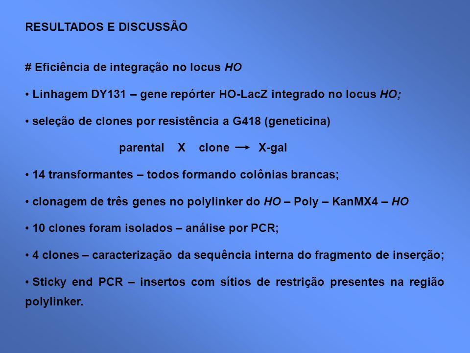 RESULTADOS E DISCUSSÃO # Eficiência de integração no locus HO Linhagem DY131 – gene repórter HO-LacZ integrado no locus HO; seleção de clones por resi