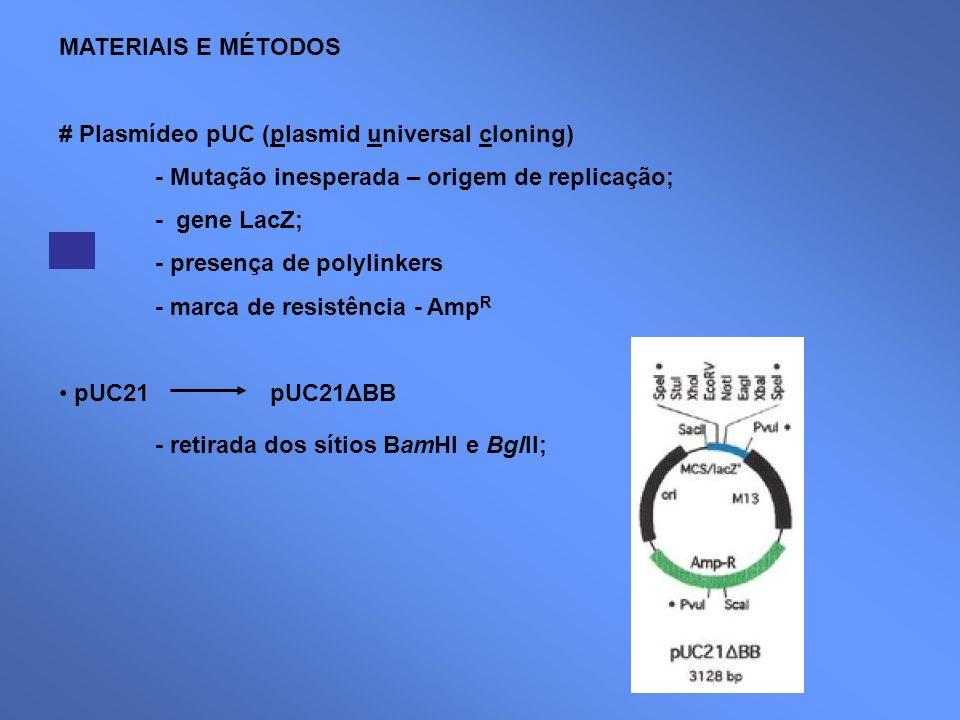 MATERIAIS E MÉTODOS # Plasmídeo pUC (plasmid universal cloning) - Mutação inesperada – origem de replicação; - gene LacZ; - presença de polylinkers -