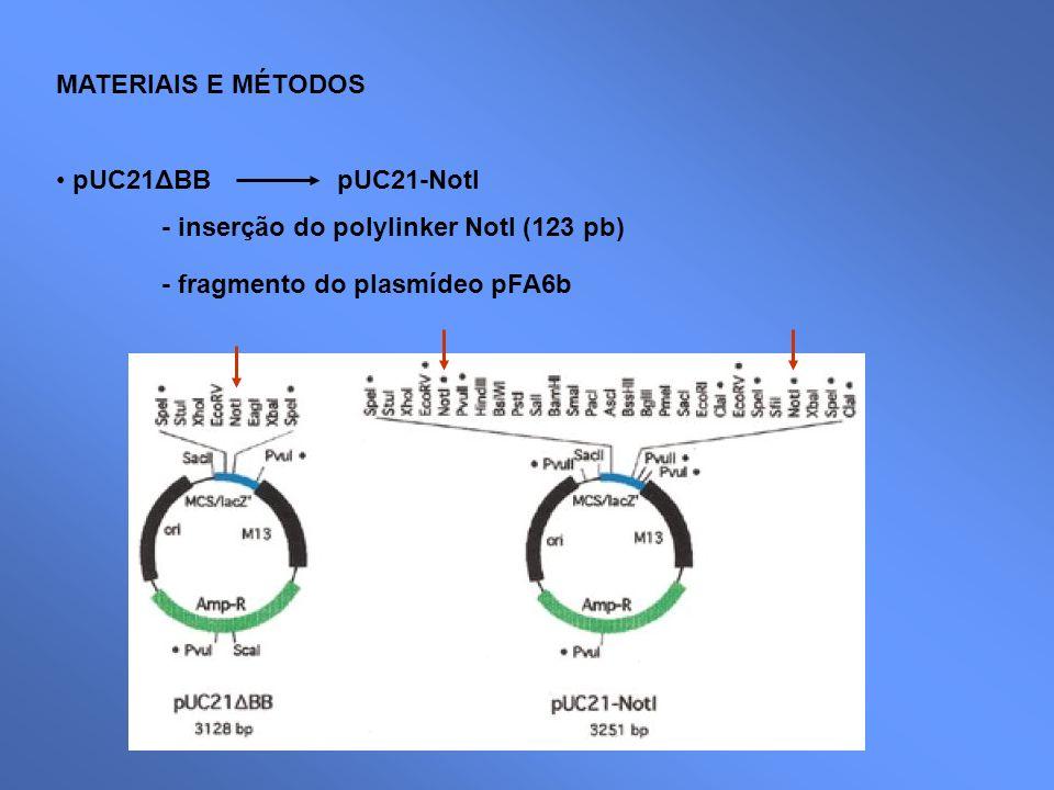 MATERIAIS E MÉTODOS pUC21ΔBB pUC21-NotI - inserção do polylinker NotI (123 pb) - fragmento do plasmídeo pFA6b