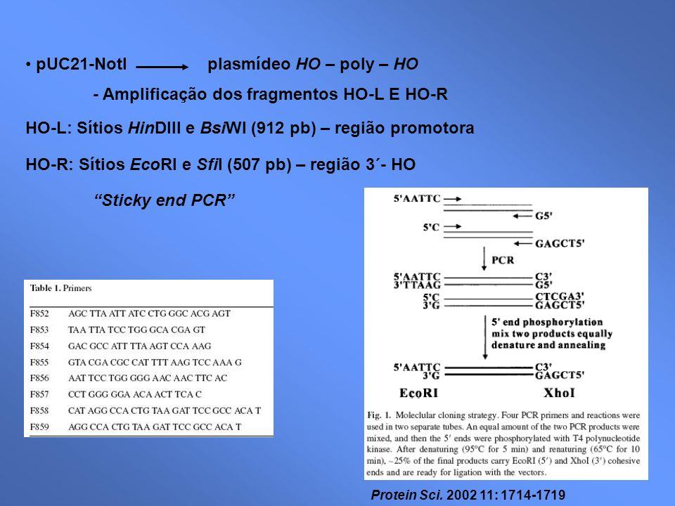 pUC21-NotI plasmídeo HO – poly – HO - Amplificação dos fragmentos HO-L E HO-R HO-L: Sítios HinDIII e BsiWI (912 pb) – região promotora HO-R: Sítios Ec