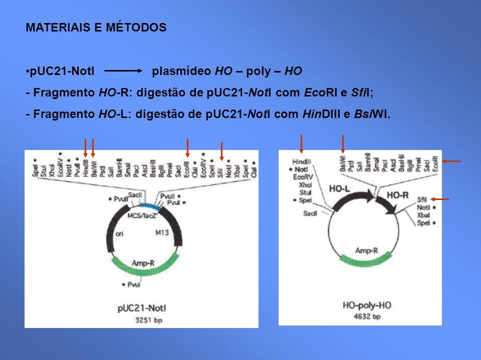 MATERIAIS E MÉTODOS pUC21-NotI plasmídeo HO – poly – HO - Fragmento HO-R: digestão de pUC21-NotI com EcoRI e SfiI; - Fragmento HO-L: digestão de pUC21