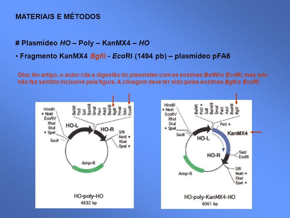 MATERIAIS E MÉTODOS # Plasmídeo HO – Poly – KanMX4 – HO Fragmento KanMX4 BglII - EcoRI (1494 pb) – plasmídeo pFA6 Obs: No artigo, o autor cita a diges
