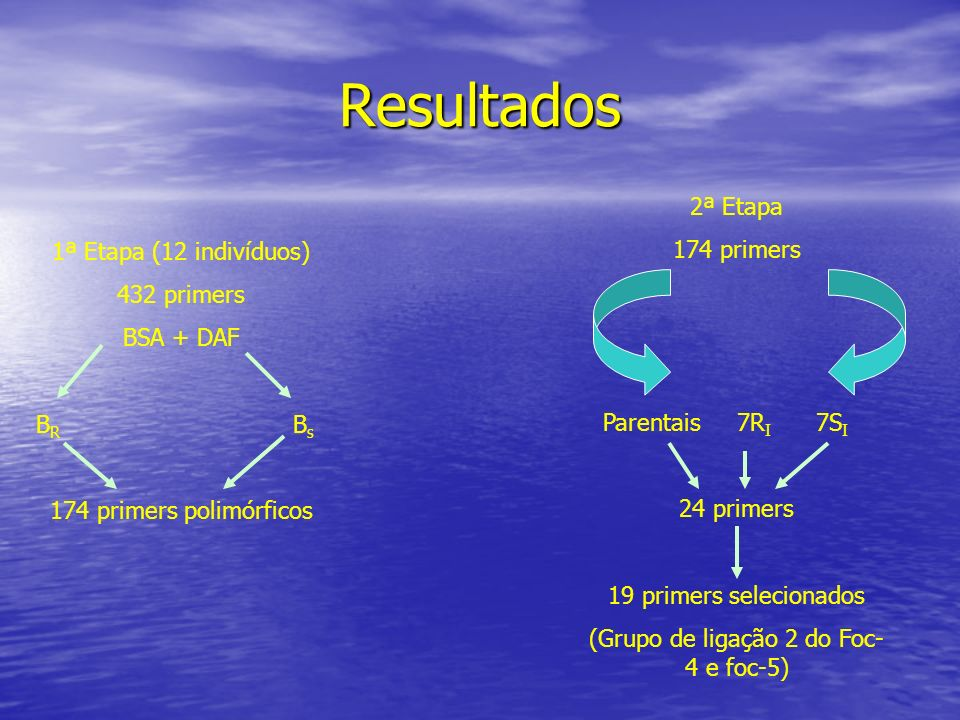 Resultados 1ª Etapa (12 indivíduos) 432 primers BSA + DAF B R B s 174 primers polimórficos 2ª Etapa 174 primers Parentais 7R I 7S I 24 primers 19 prim