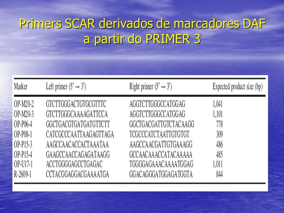 Primers SCAR derivados de marcadores DAF a partir do PRIMER 3