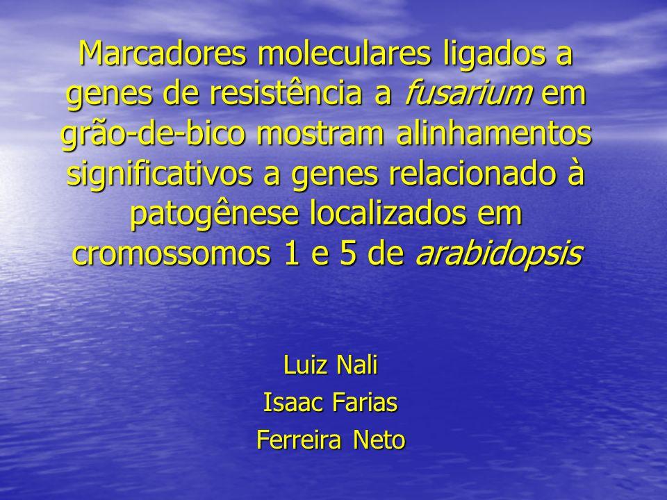 Marcadores moleculares ligados a genes de resistência a fusarium em grão-de-bico mostram alinhamentos significativos a genes relacionado à patogênese