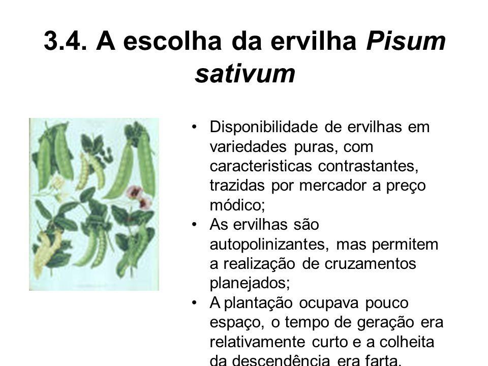 3.4. A escolha da ervilha Pisum sativum Disponibilidade de ervilhas em variedades puras, com caracteristicas contrastantes, trazidas por mercador a pr