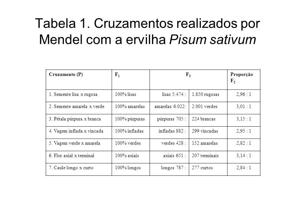 Tabela 1. Cruzamentos realizados por Mendel com a ervilha Pisum sativum Cruzamento (P)F1F1 F2F2 Proporção F 2 1. Semente lisa x rugosa100% lisaslisas
