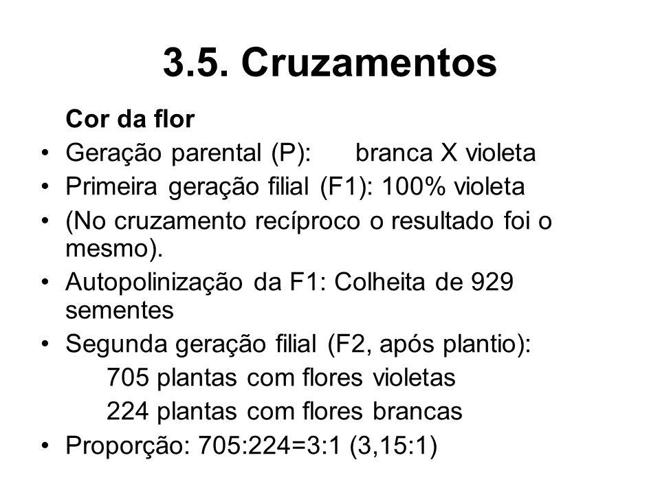 3.5. Cruzamentos Cor da flor Geração parental (P): branca X violeta Primeira geração filial (F1): 100% violeta (No cruzamento recíproco o resultado fo