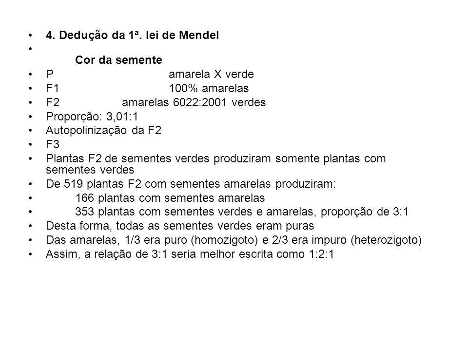 4. Dedução da 1ª. lei de Mendel Cor da semente P amarela X verde F1100% amarelas F2amarelas 6022:2001 verdes Proporção: 3,01:1 Autopolinização da F2 F