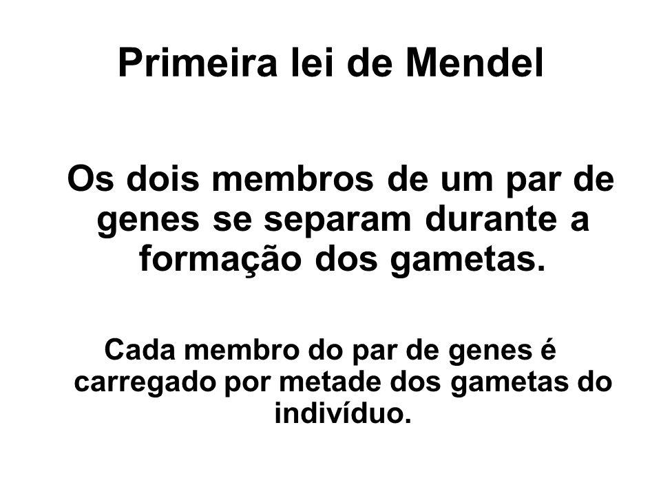 Primeira lei de Mendel Os dois membros de um par de genes se separam durante a formação dos gametas. Cada membro do par de genes é carregado por metad