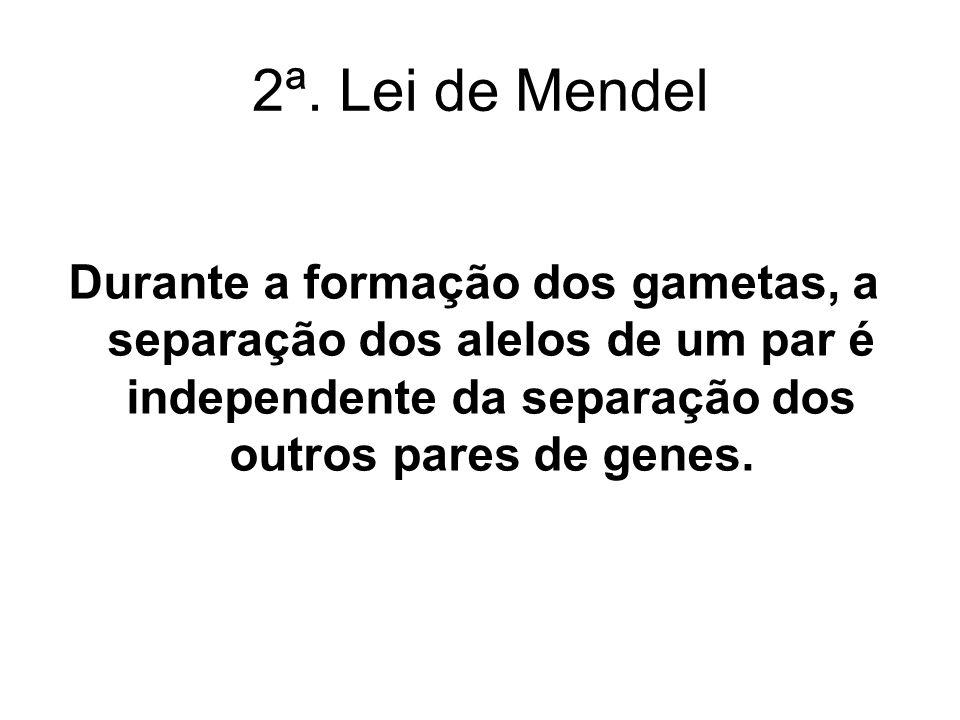 2ª. Lei de Mendel Durante a formação dos gametas, a separação dos alelos de um par é independente da separação dos outros pares de genes.