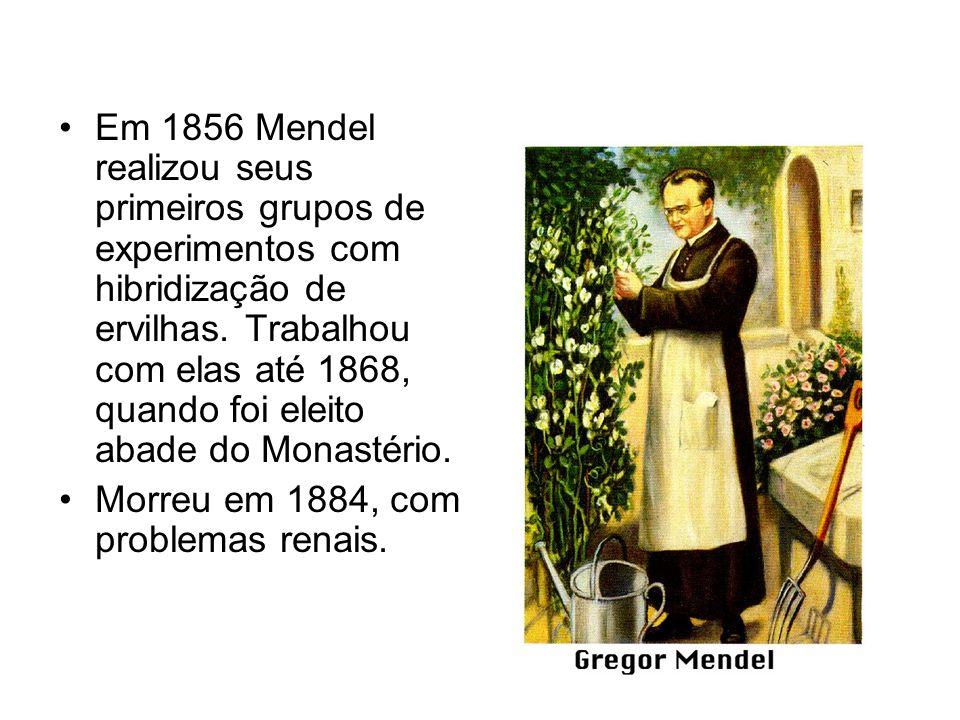 Em 1856 Mendel realizou seus primeiros grupos de experimentos com hibridização de ervilhas. Trabalhou com elas até 1868, quando foi eleito abade do Mo