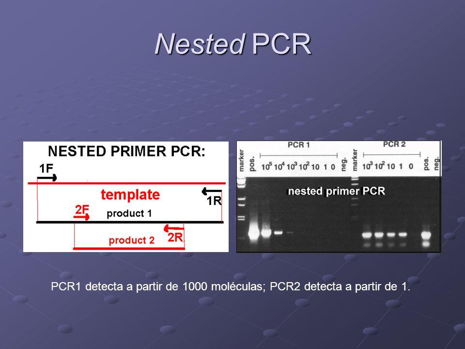 Nested PCR PCR1 detecta a partir de 1000 moléculas; PCR2 detecta a partir de 1.
