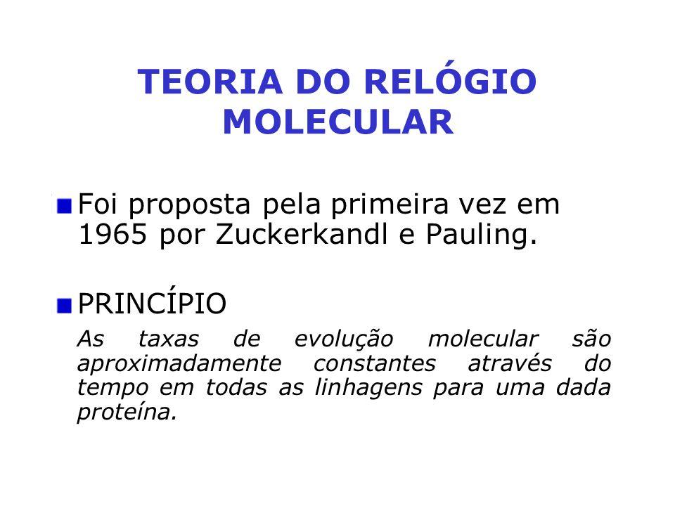 TEORIA DO RELÓGIO MOLECULAR Foi proposta pela primeira vez em 1965 por Zuckerkandl e Pauling. PRINCÍPIO As taxas de evolução molecular são aproximadam