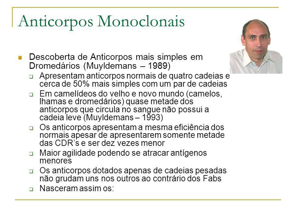 Anticorpos Monoclonais Descoberta de Anticorpos mais simples em Dromedários (Muyldemans – 1989) Apresentam anticorpos normais de quatro cadeias e cerc