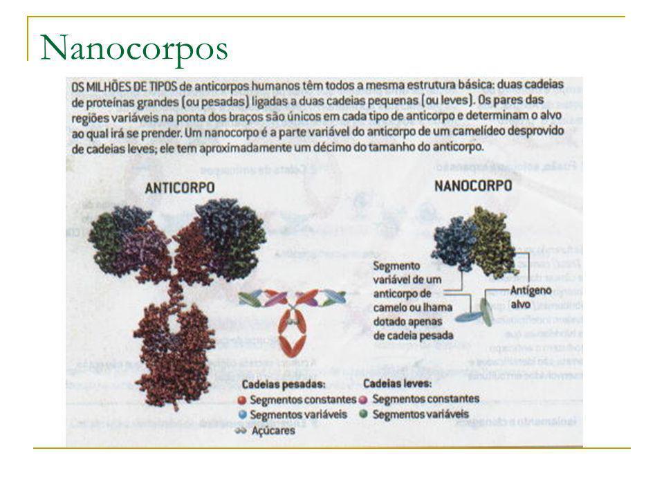 Nanocorpos