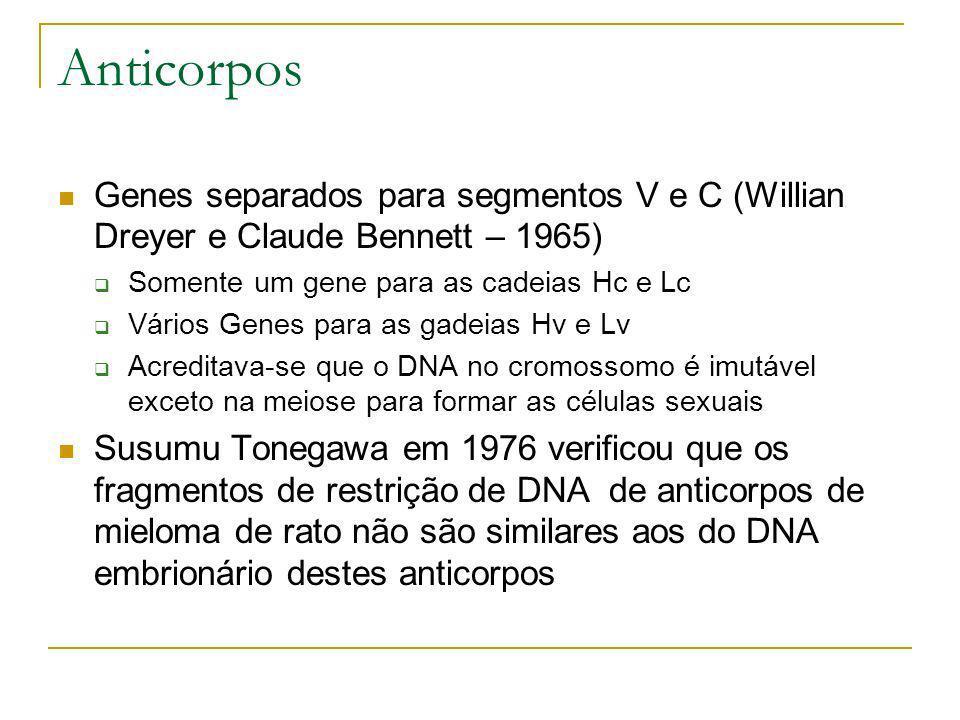 Genes separados para segmentos V e C (Willian Dreyer e Claude Bennett – 1965) Somente um gene para as cadeias Hc e Lc Vários Genes para as gadeias Hv