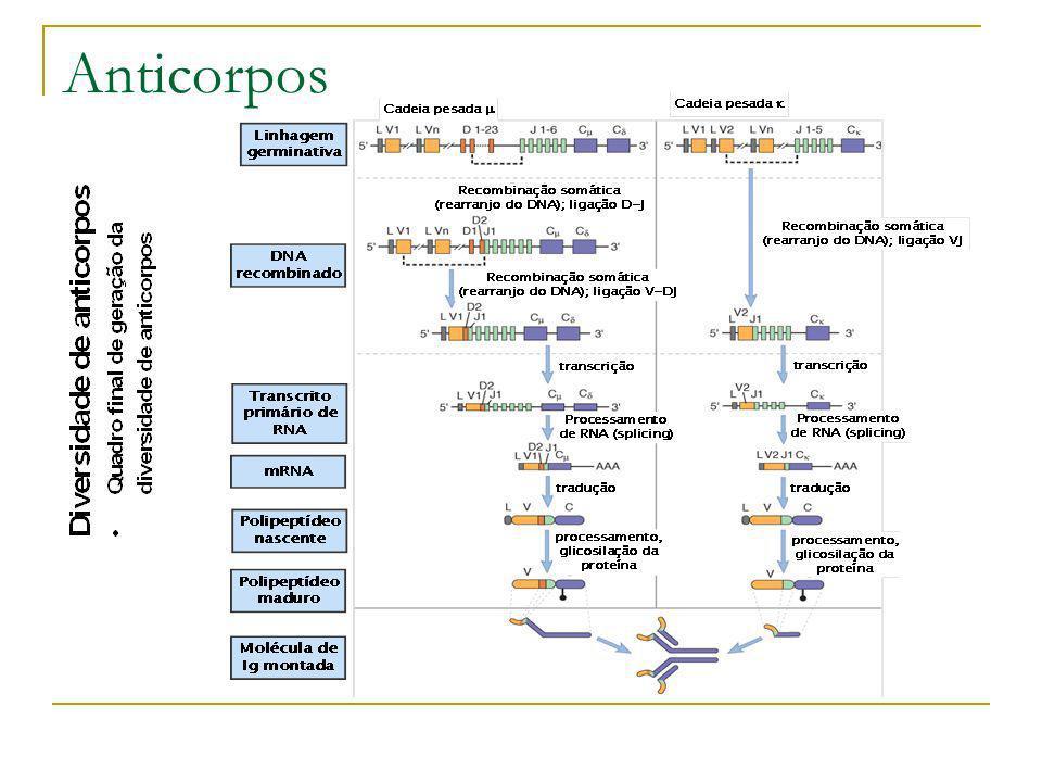 Anticorpos Diversidade Estudos indicam que a diversidade tolerada in vitro de em VhH (Cadeia pesada autônoma possíveis) em 3 CDRs (região determinante de complementaridade ) clássicos e CDR4 é muito maior do que a existente na natureza independente dos aspectos genéticos e biológicos aos quais está sujeito o sistema imunológico.Sidhu ss (2005)