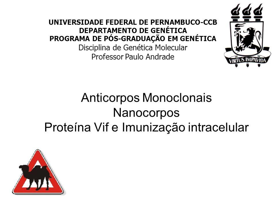 Anticorpos Monoclonais Nanocorpos Proteína Vif e Imunização intracelular UNIVERSIDADE FEDERAL DE PERNAMBUCO-CCB DEPARTAMENTO DE GENÉTICA PROGRAMA DE PÓS-GRADUAÇÃO EM GENÉTICA Disciplina de Genética Molecular Professor Paulo Andrade UNIVERSIDADE FEDERAL DE PERNAMBUCO-CCB DEPARTAMENTO DE GENÉTICA PROGRAMA DE PÓS-GRADUAÇÃO EM GENÉTICA Disciplina de Genética Molecular Professor Paulo Andrade