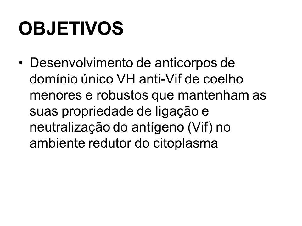 OBJETIVOS Desenvolvimento de anticorpos de domínio único VH anti-Vif de coelho menores e robustos que mantenham as suas propriedade de ligação e neutralização do antígeno (Vif) no ambiente redutor do citoplasma