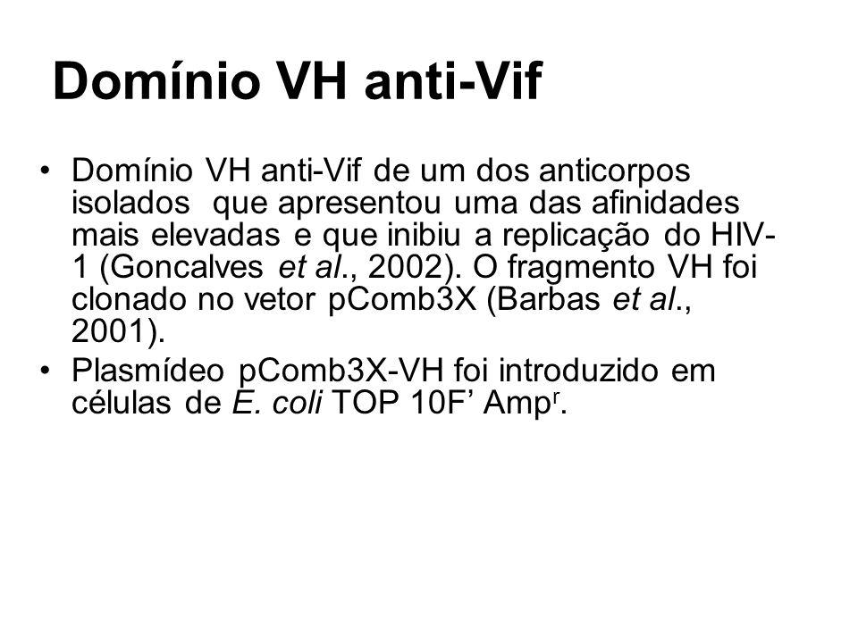 Domínio VH anti-Vif Domínio VH anti-Vif de um dos anticorpos isolados que apresentou uma das afinidades mais elevadas e que inibiu a replicação do HIV- 1 (Goncalves et al., 2002).