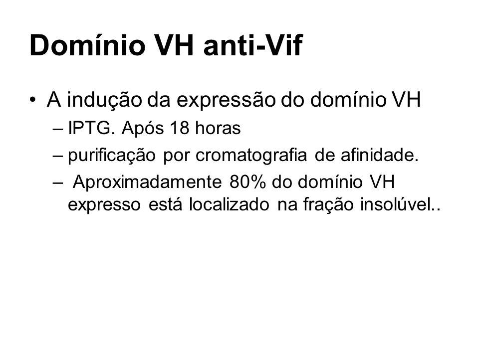Domínio VH anti-Vif A indução da expressão do domínio VH –IPTG. Após 18 horas –purificação por cromatografia de afinidade. – Aproximadamente 80% do do
