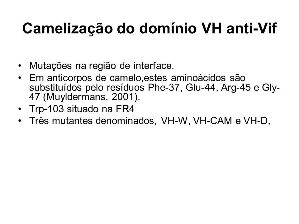 Camelização do domínio VH anti-Vif Mutações na região de interface. Em anticorpos de camelo,estes aminoácidos são substituídos pelo resíduos Phe-37, G