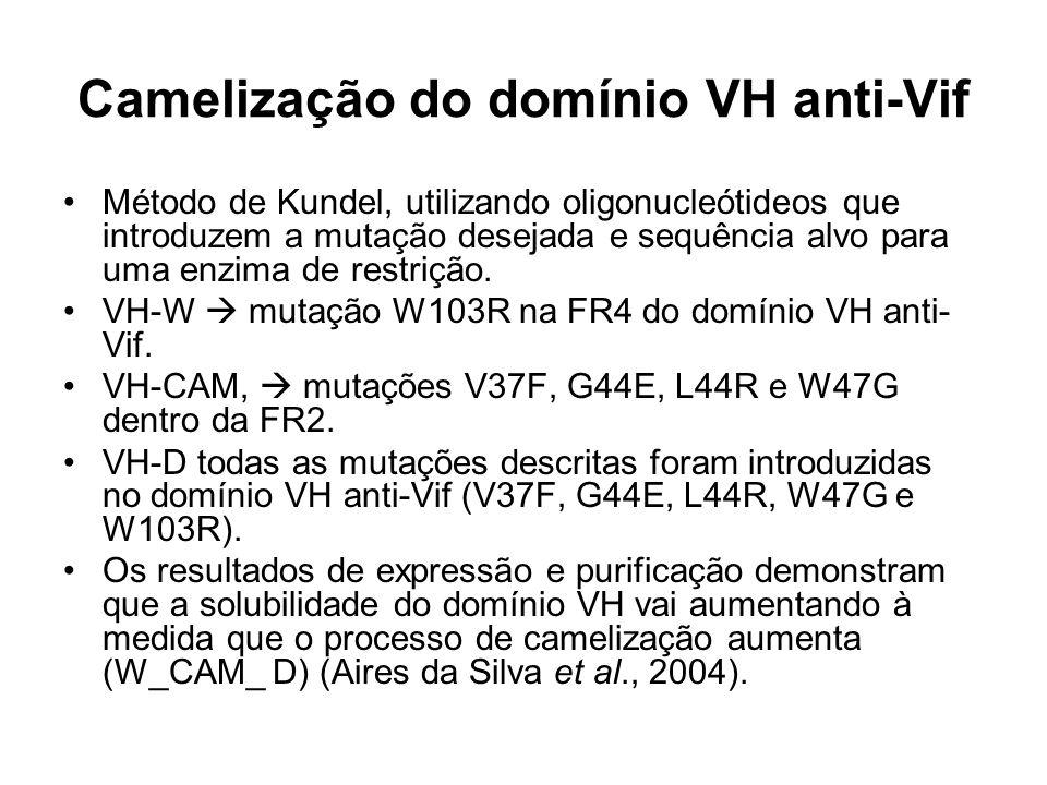 Camelização do domínio VH anti-Vif Método de Kundel, utilizando oligonucleótideos que introduzem a mutação desejada e sequência alvo para uma enzima de restrição.